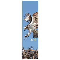 skateboard griptape national geographic spirit eagle 9